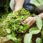 Kiedy w ogrodzie przydadzą się preparaty chwastobójcze?